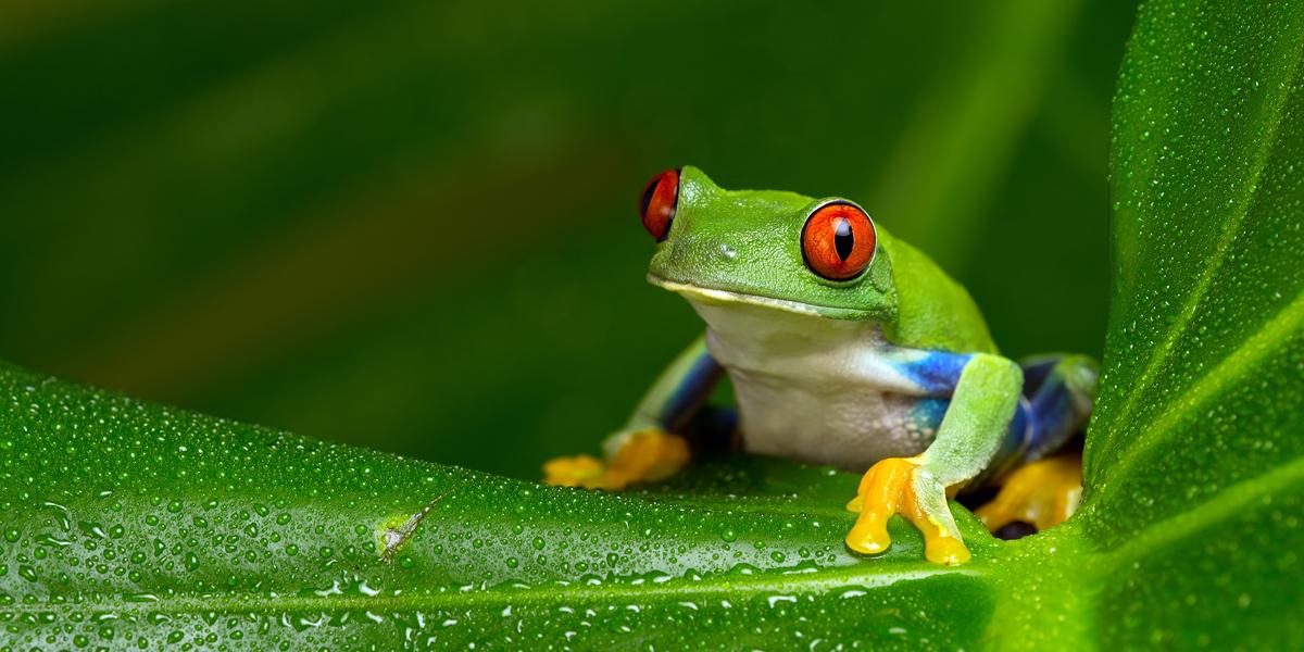 Die Digitalisierung der Arbeitswelt bringt ein interessantes, oftmals unterschätztes Phänomen mit sich, das Verhaltensforscher von sich verändernden Situationen kennen: das Boiling-Frog-Syndrom.