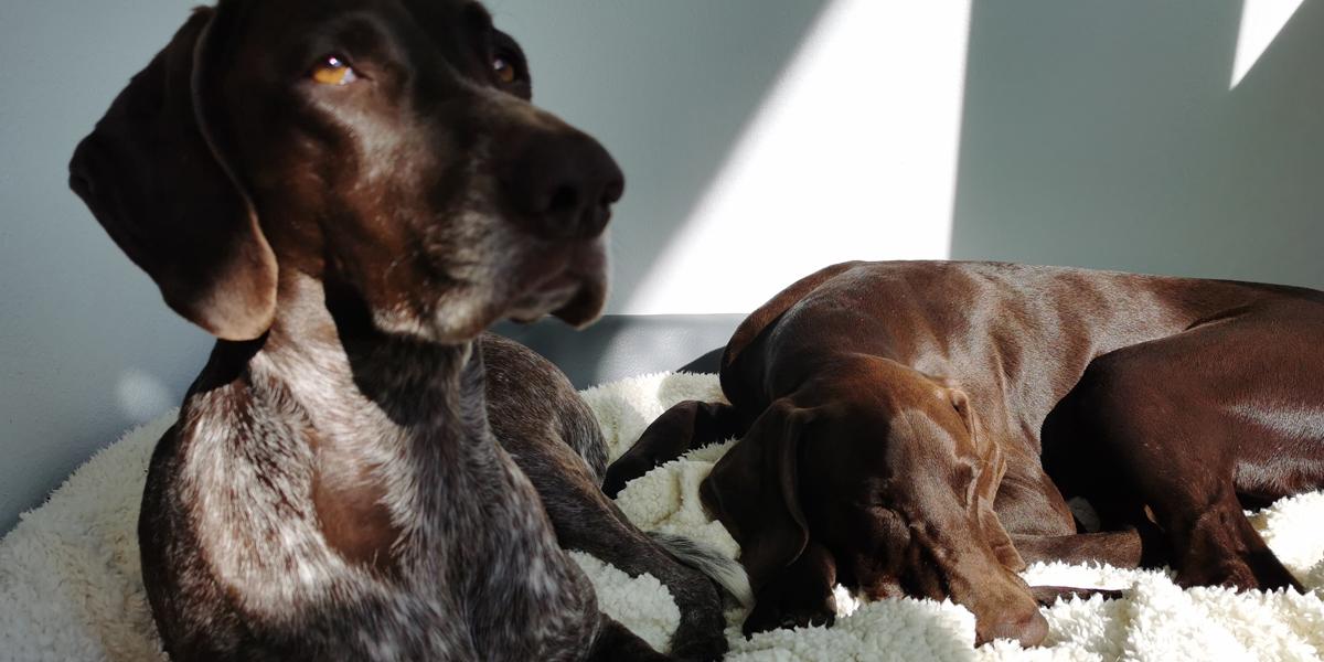 Tierisch viele Vorteile: Bürohunde verbessern Arbeitsklima und Produktivität